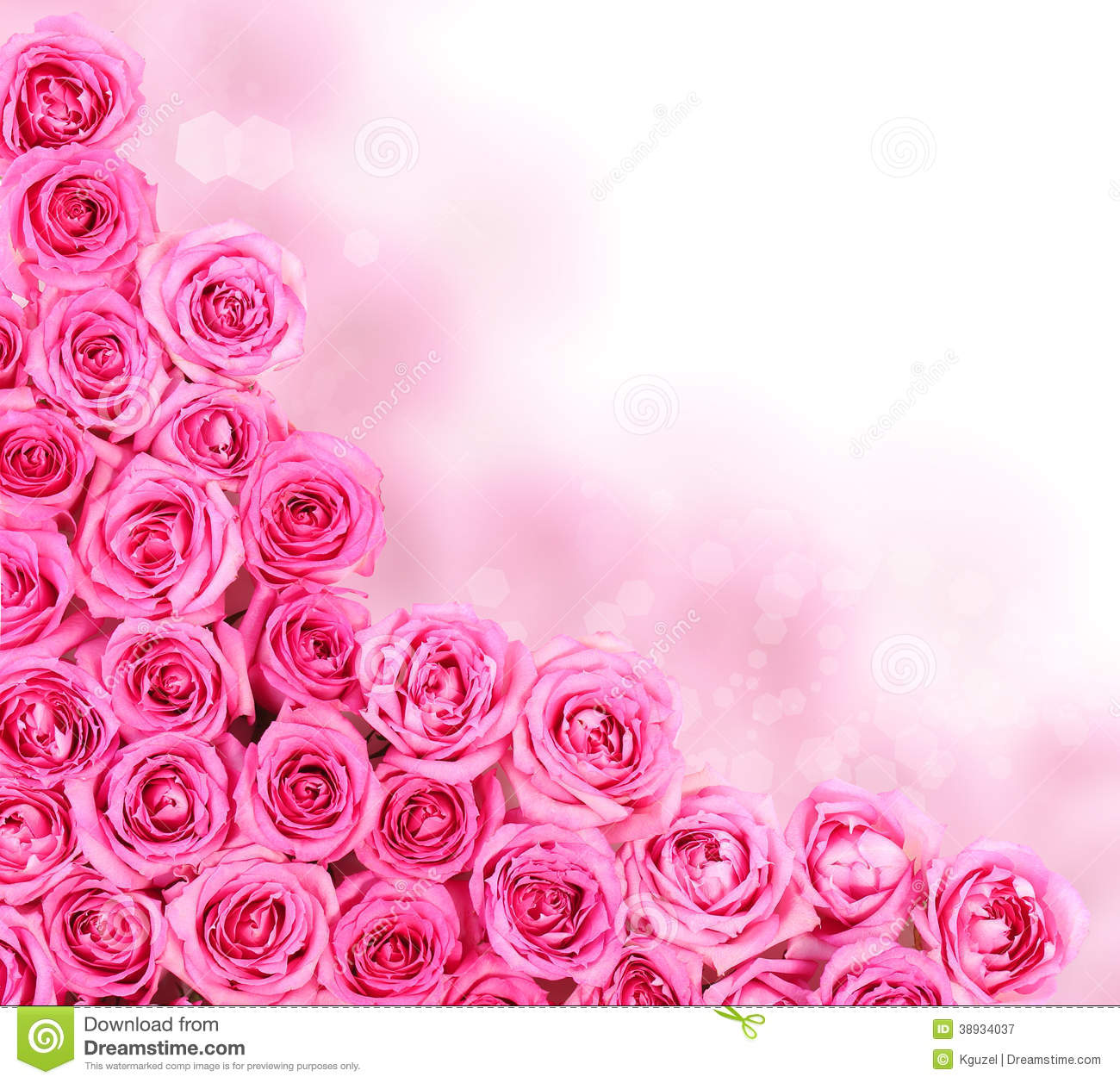 Hot Pink Roses Border stock image Image of flora bright