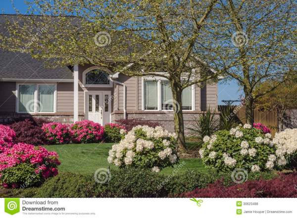 house with pink and white rhododendrons