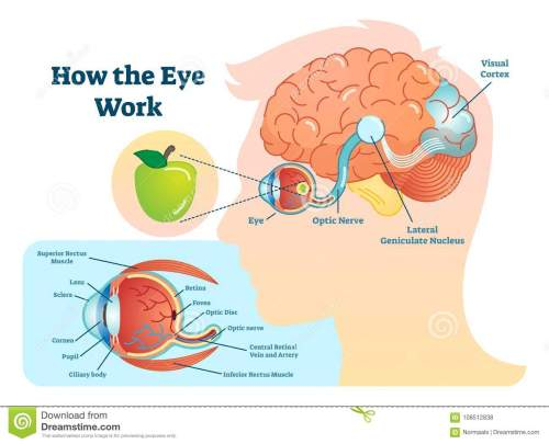 small resolution of eye diagram stock illustrations 2 360 eye diagram stock illustrations vectors clipart dreamstime