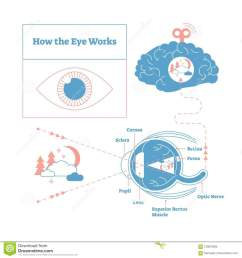eye diagram stock illustrations 2 378 eye diagram stock illustrations vectors clipart dreamstime [ 1300 x 1390 Pixel ]