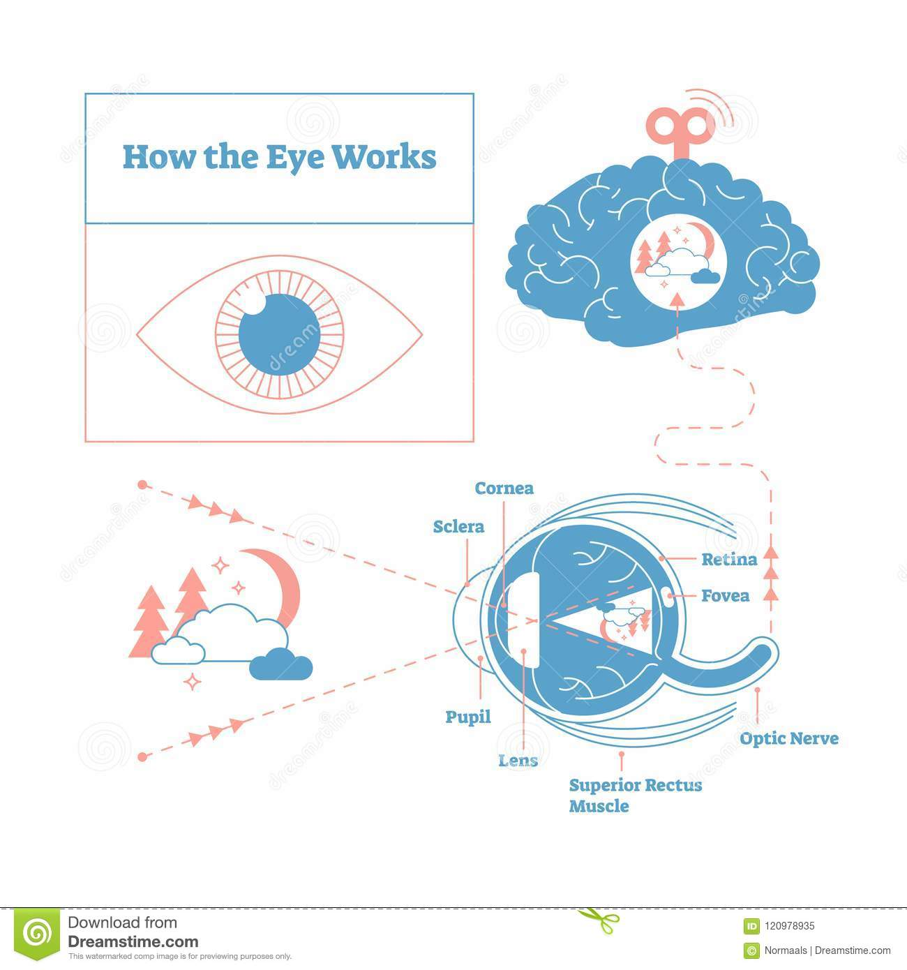 hight resolution of eye diagram stock illustrations 2 378 eye diagram stock illustrations vectors clipart dreamstime