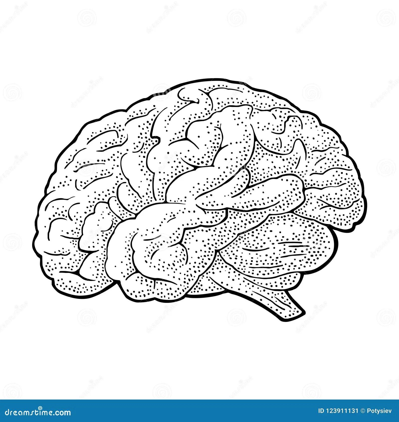 Label Brain Diagram