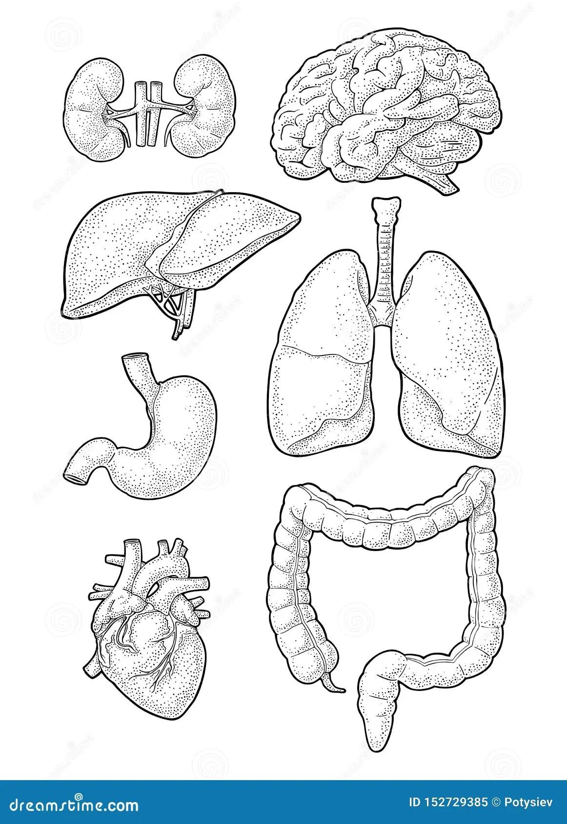 32 Label Organs