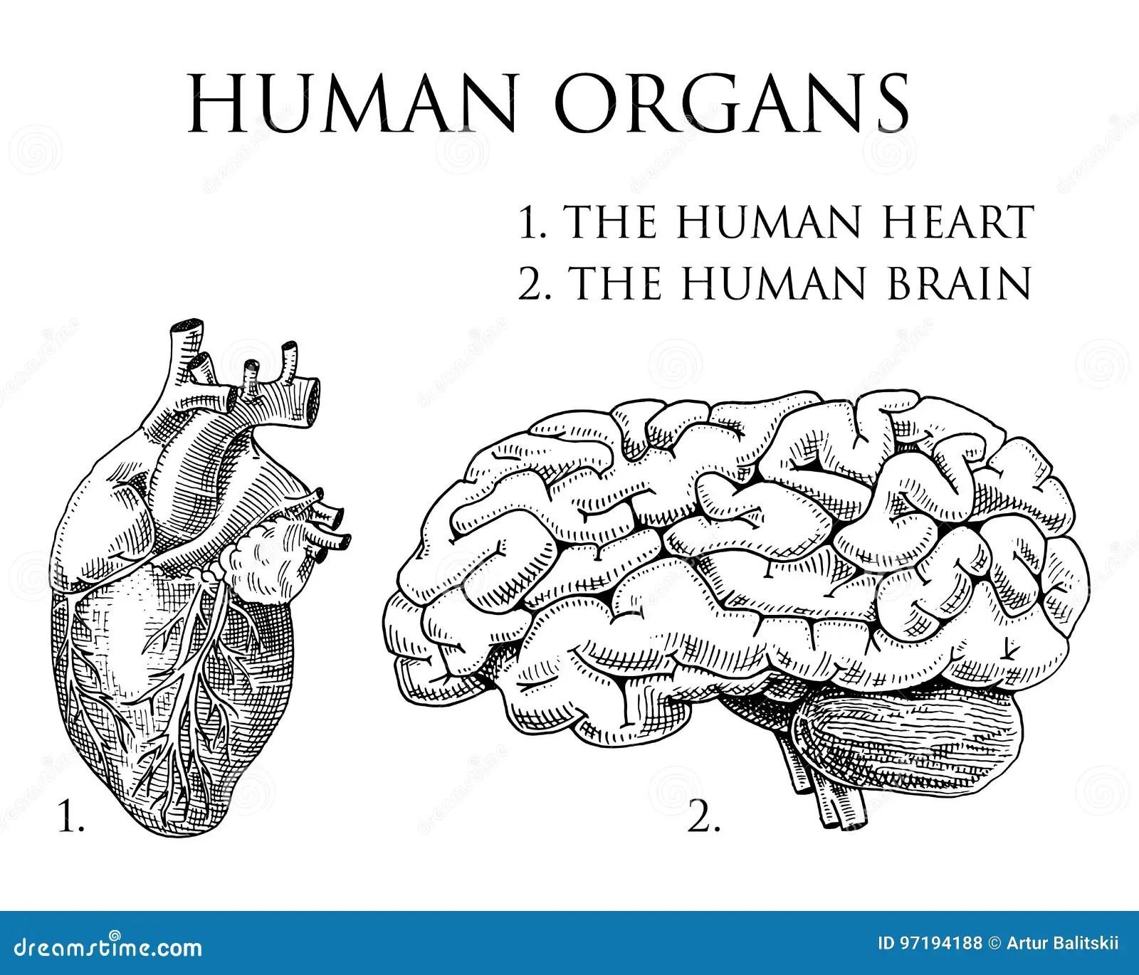 Hand Drawing Anatomy