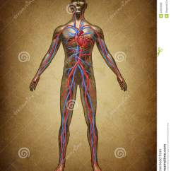 Healthy Heart Diagram Wiring Motorcycle Human Blood Circulation Grunge Royalty Free Stock Images - Image: 22694609
