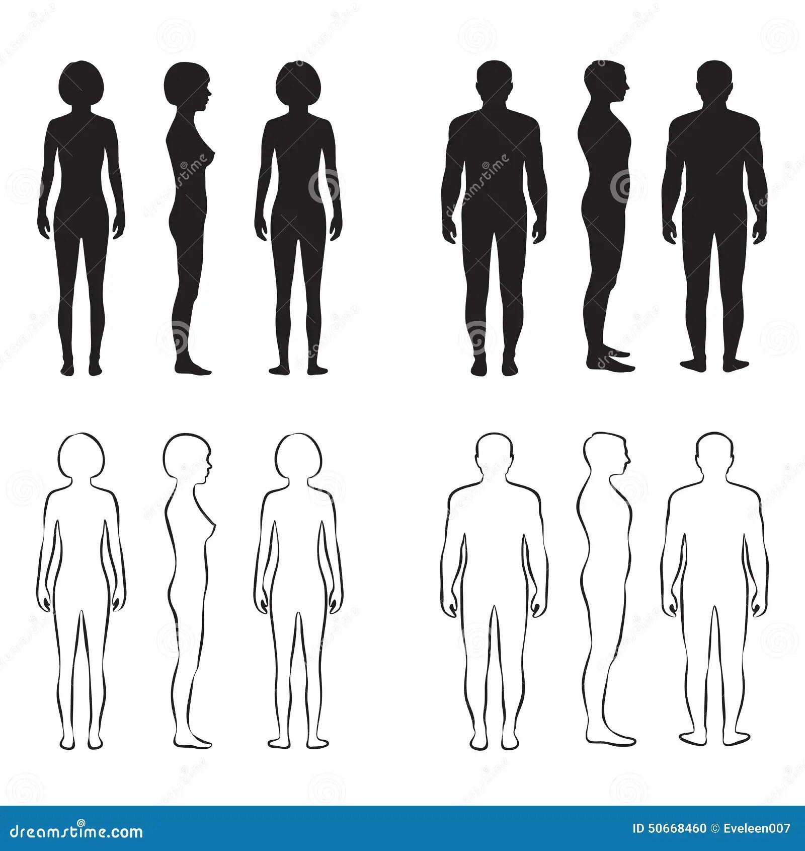 Human Body Anatomy Stock Vector