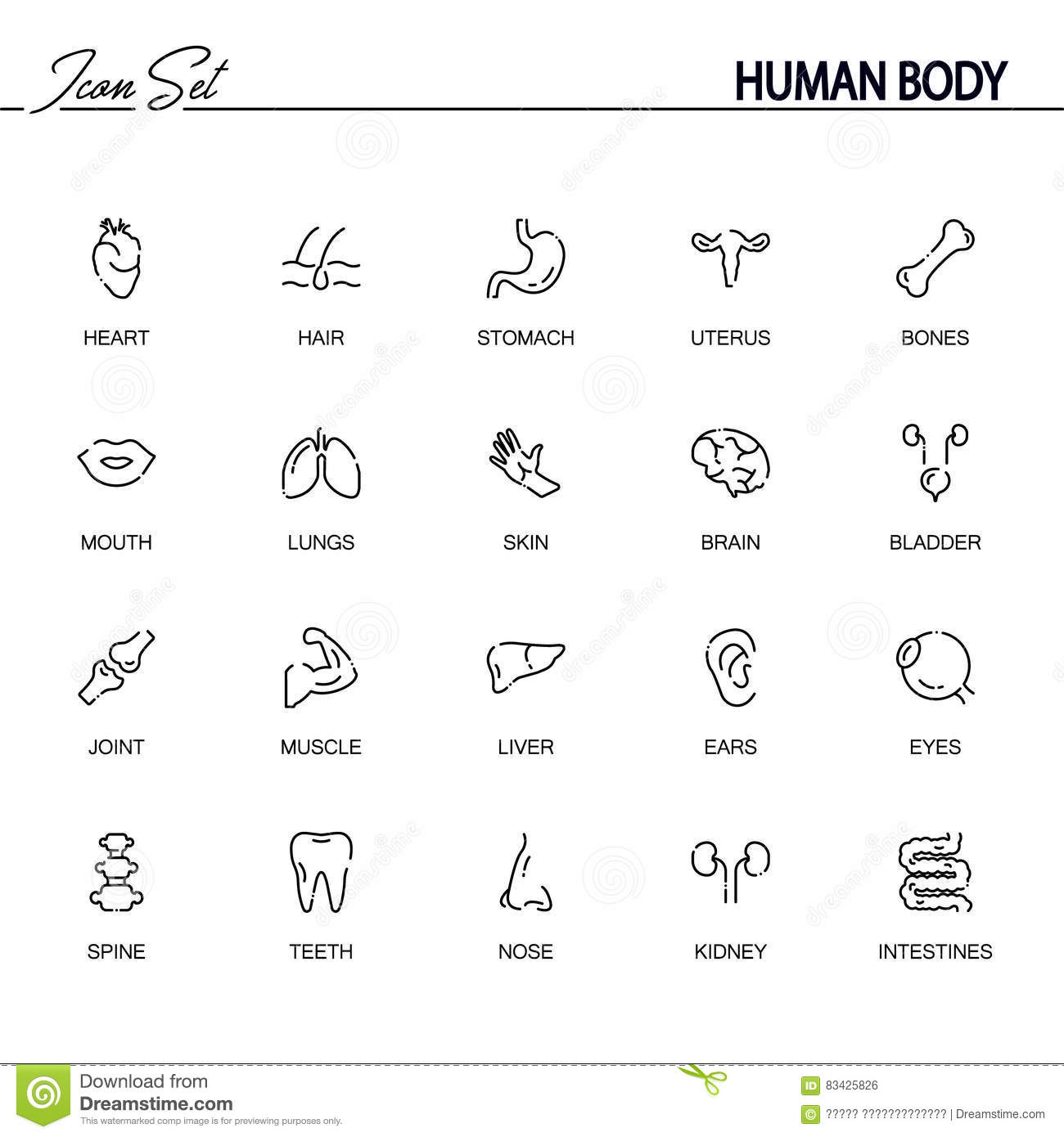 Human Body Icon Set Stock Vector Illustration Of