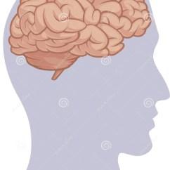 Inside Skull Diagram Fleetwood Motorhome Human Body Part Brain Head Silhouette Illustration 43552492
