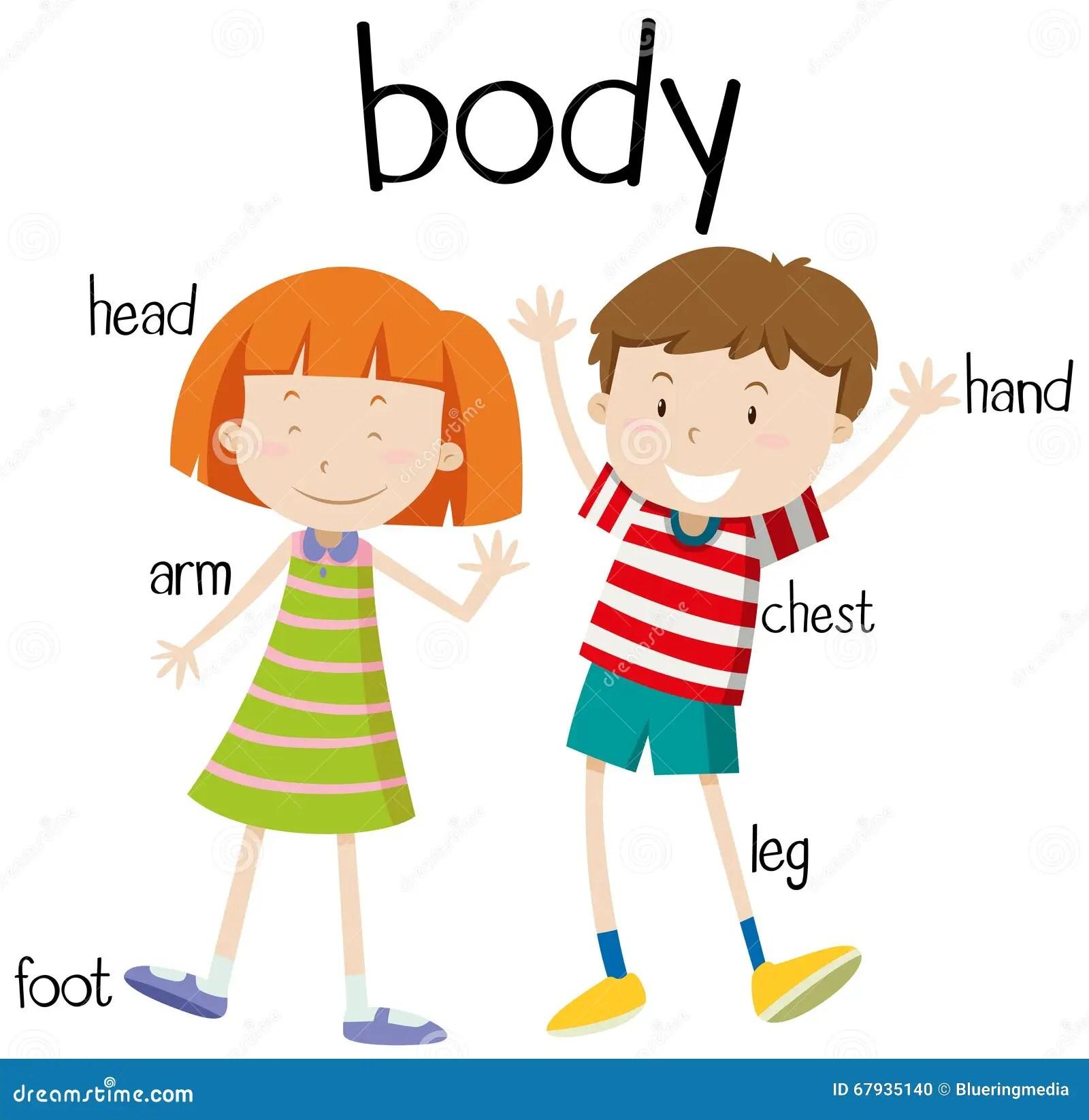 Human Body Parts Diagram Stock Vector Illustration Of