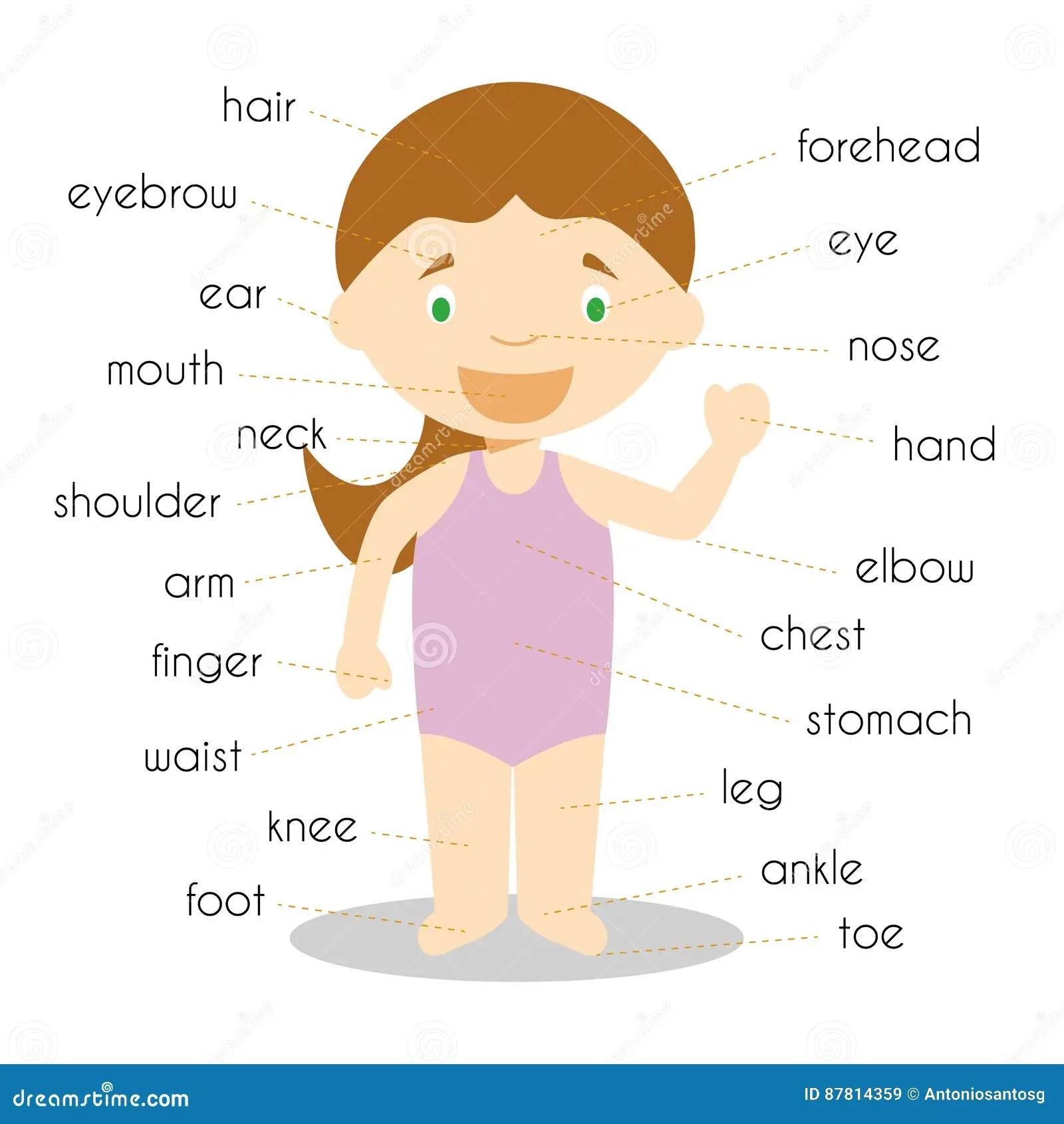 Human Body Parts Vocabulary In English Vector Illustration