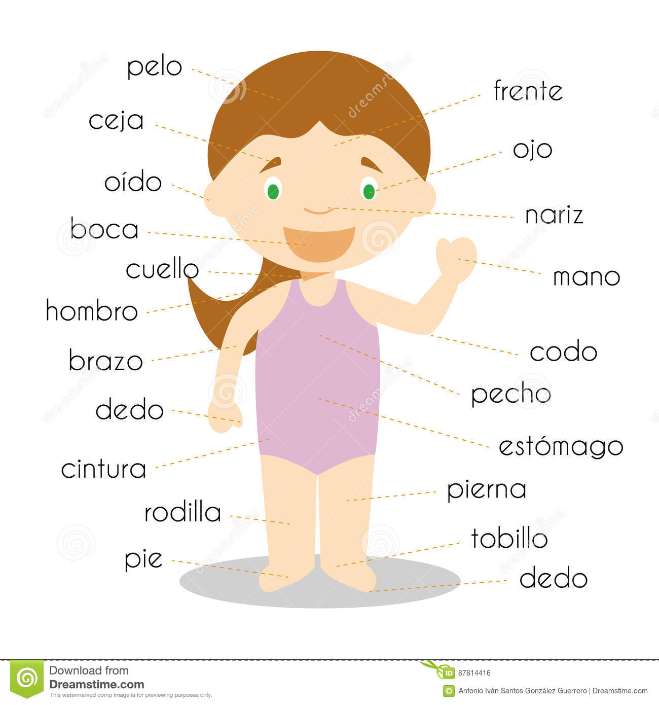 Human Body Parts Vocabulary In Spanish Stock Vector