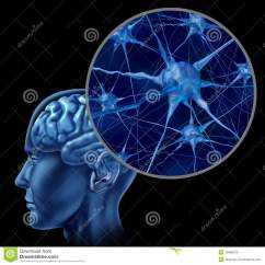 Human Brain Cell Diagram Ez Go With Close Up Of Active Neurons Stock Photo - Image System, Body: 18466076