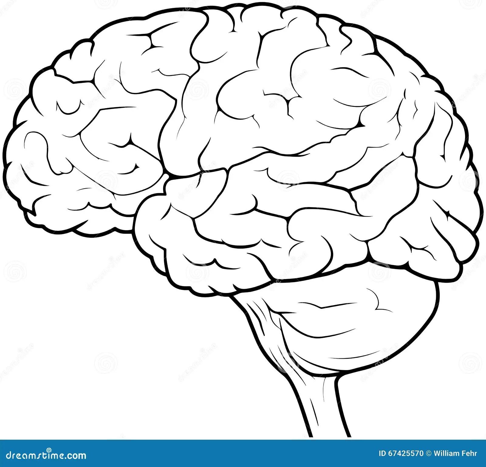 Human Brain Drawing Stock Illustration Illustration Of
