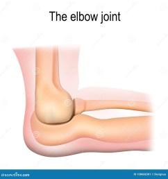human elbow joint anatomy  [ 1300 x 1390 Pixel ]