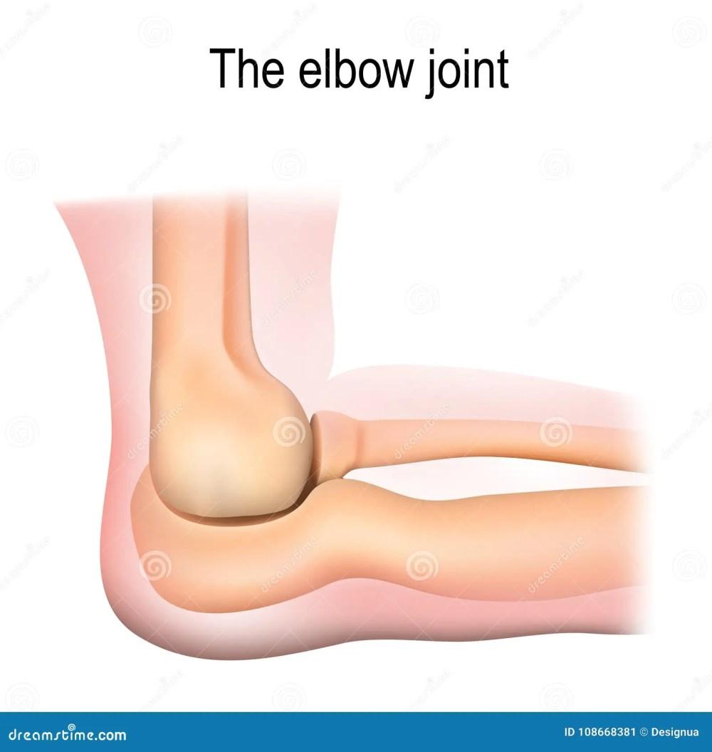 medium resolution of human elbow joint anatomy