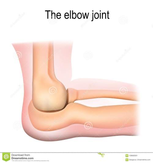 small resolution of human elbow joint anatomy