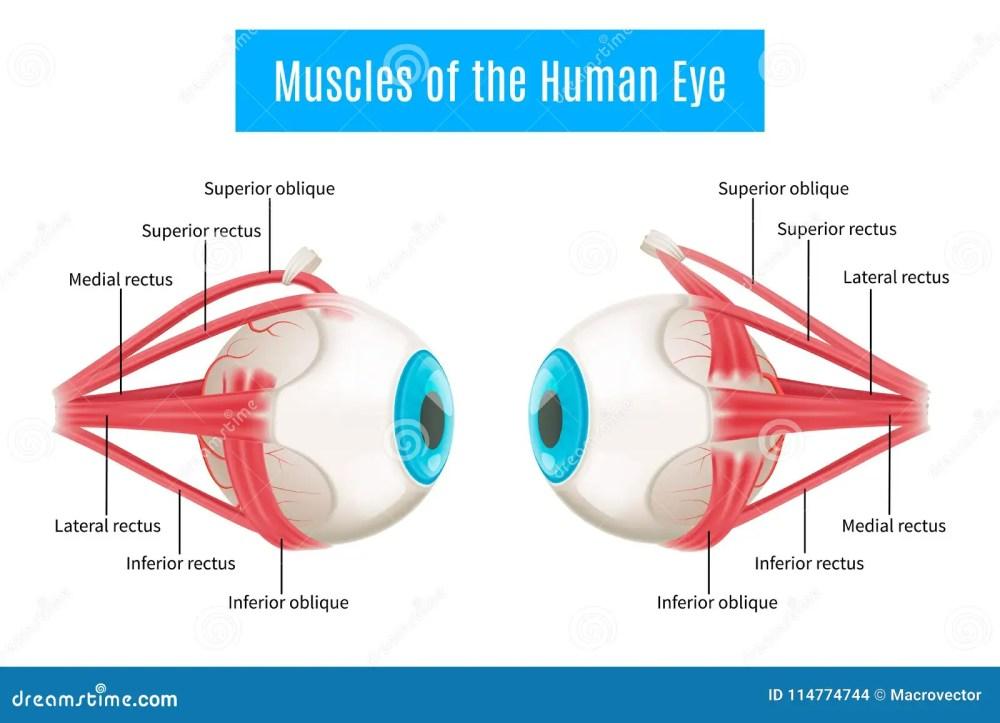 medium resolution of human eye anatomy diagram