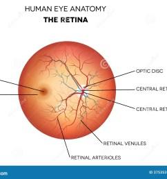 human eye anatomy retina stock vector illustration of eyes 37535317 rh dreamstime com eye diagram label human eye diagram labeled [ 1300 x 997 Pixel ]