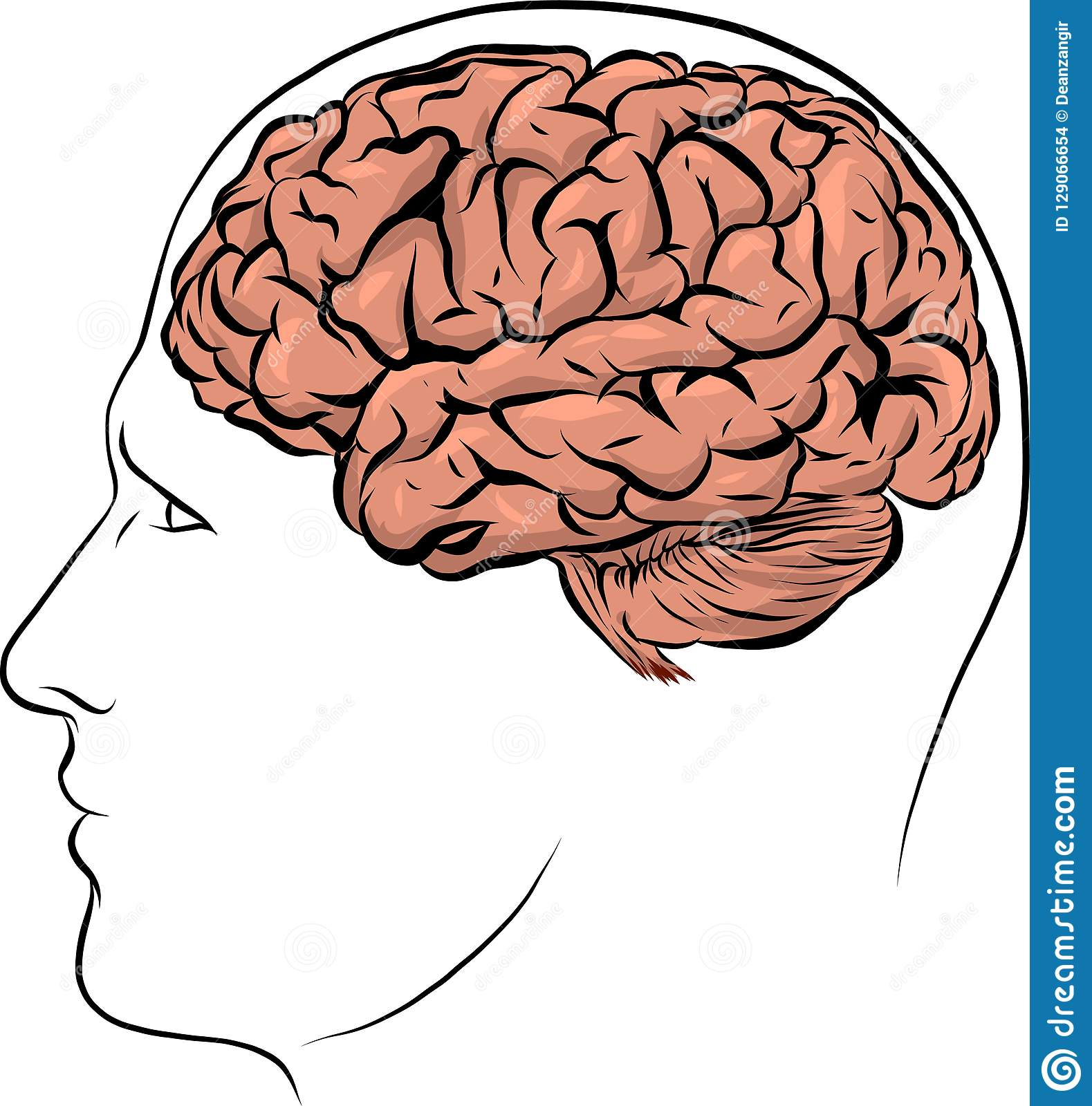 hight resolution of human face brown silhouette with brain inside