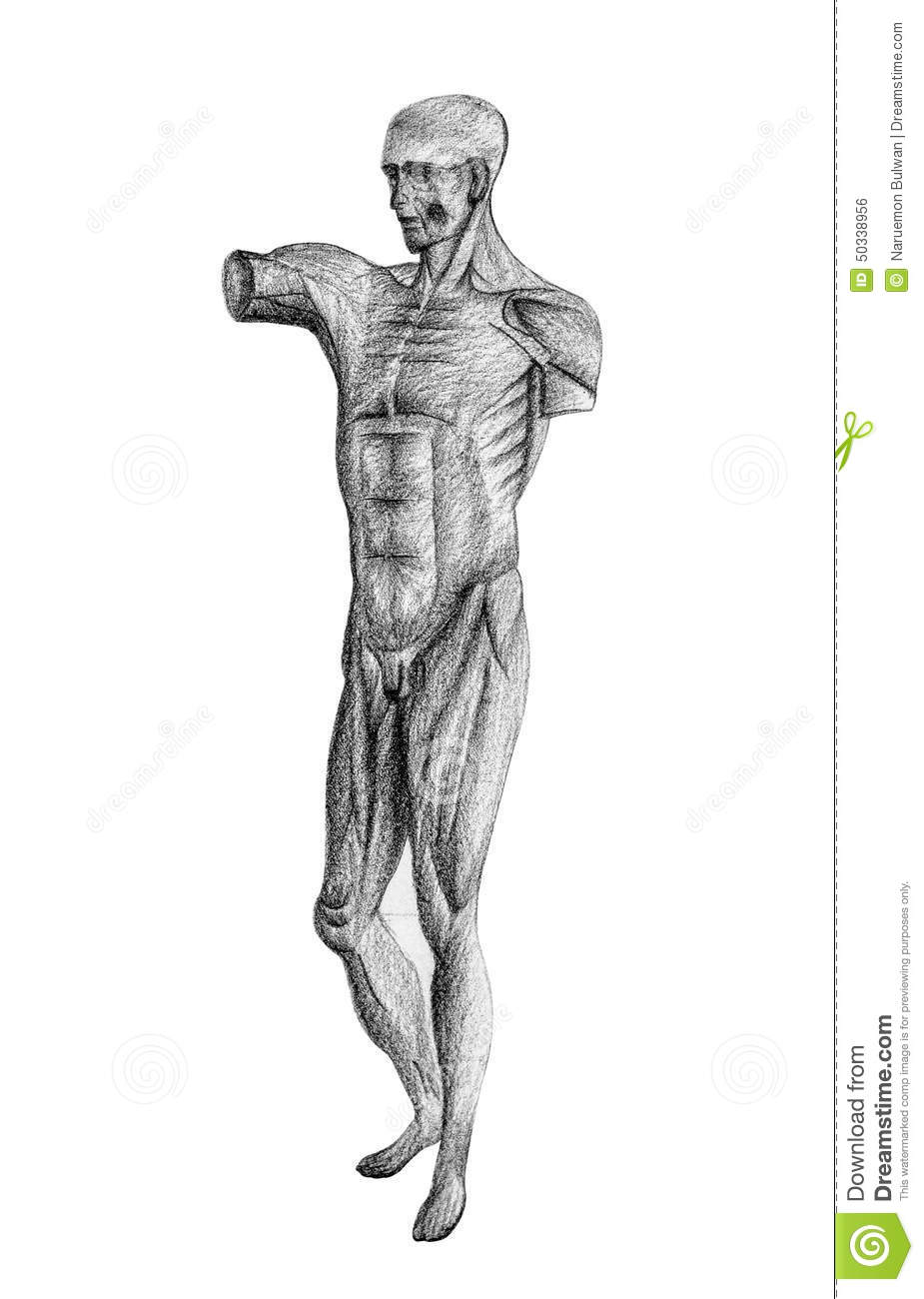 Human Figure Drawing From 45 Angle Stock Illustration