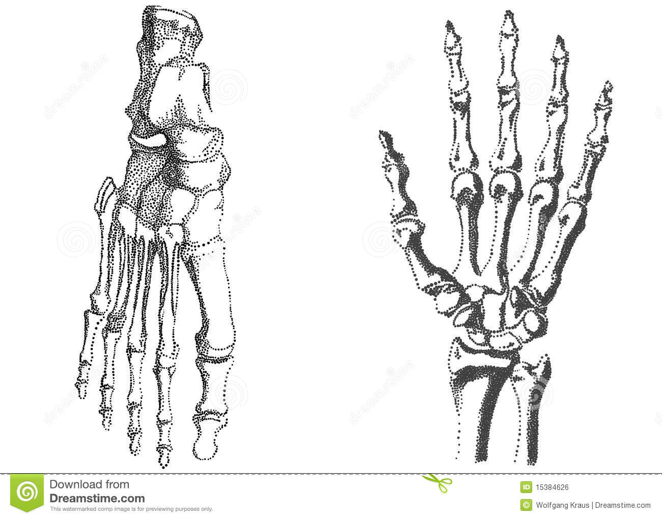 Human Hand And Foot Stock Vector Illustration Of Anatomy