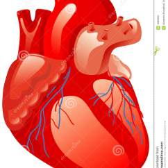 Vintage Red Real Heart Diagram Dol Starter Wiring Human Anatomy Kidneys And Liver Free