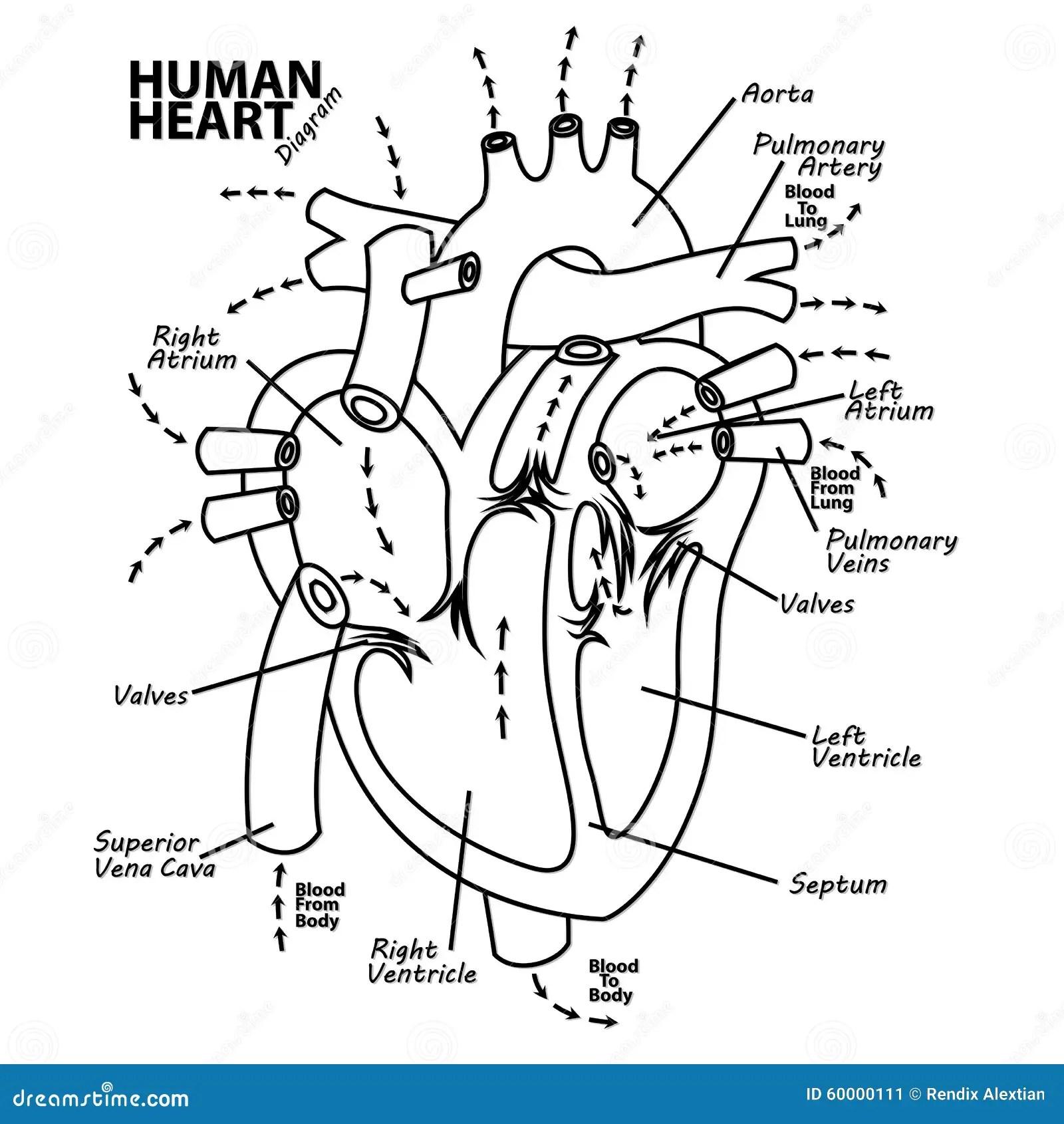 Human Heart Diagram Anatomy Tattoo Stock Vector