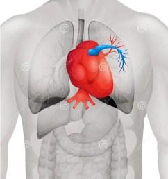 human heart diagram in detail [ 1146 x 1300 Pixel ]