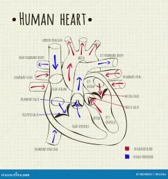 a human heart diagram [ 1300 x 1390 Pixel ]