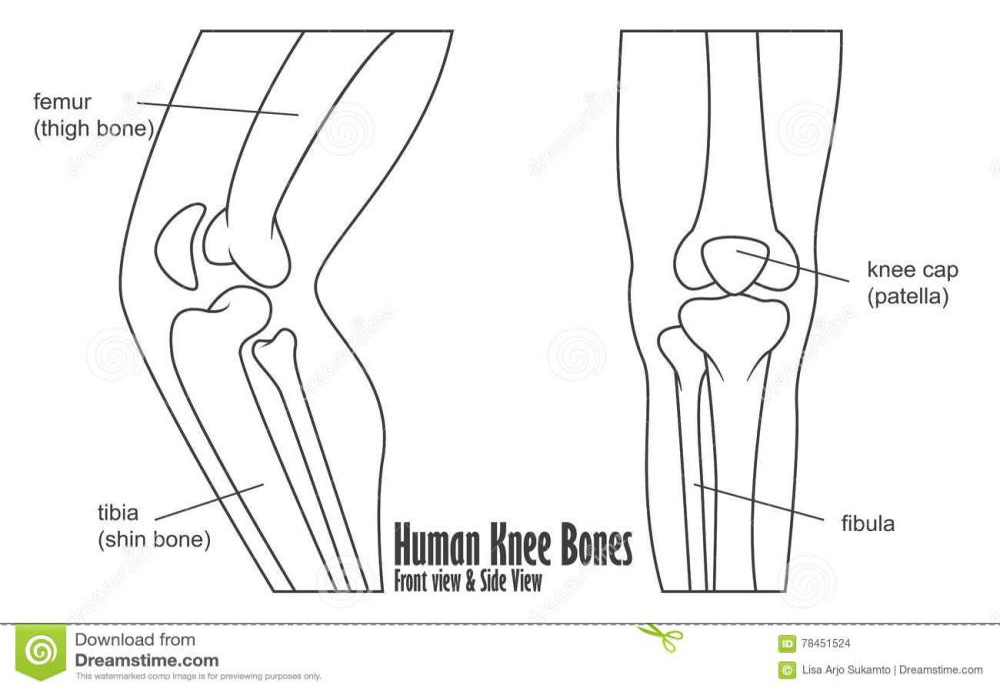 medium resolution of human knee bones front and side view anatomy
