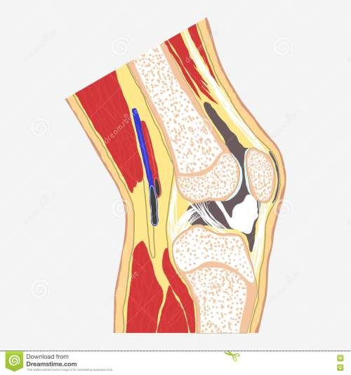 small resolution of human knee joint medical body anatomy orthopedic clinic leg diagram vector