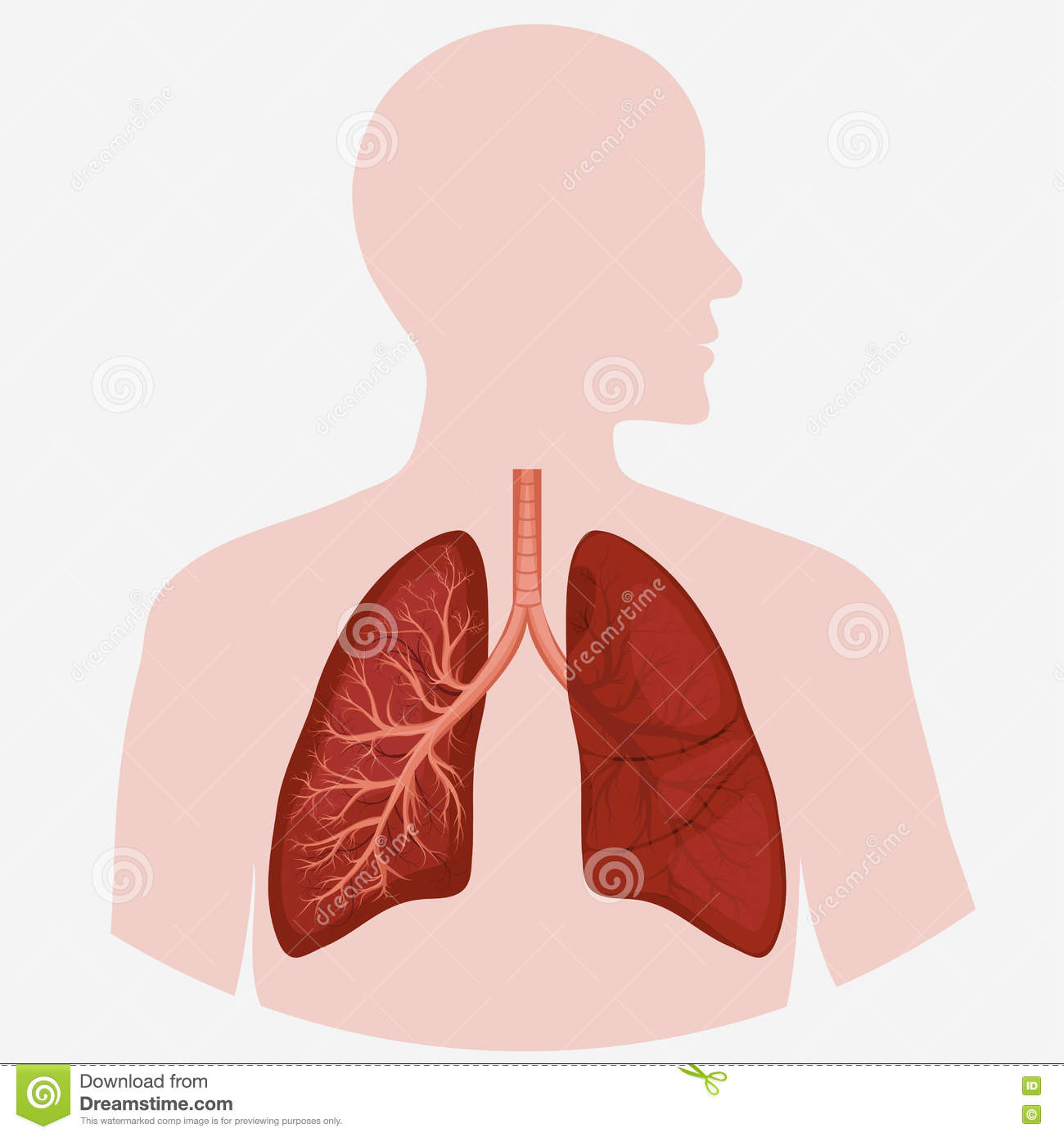 lungs human anatomy diagram amp sub wiring pneumonia cartoons illustrations and vector stock images