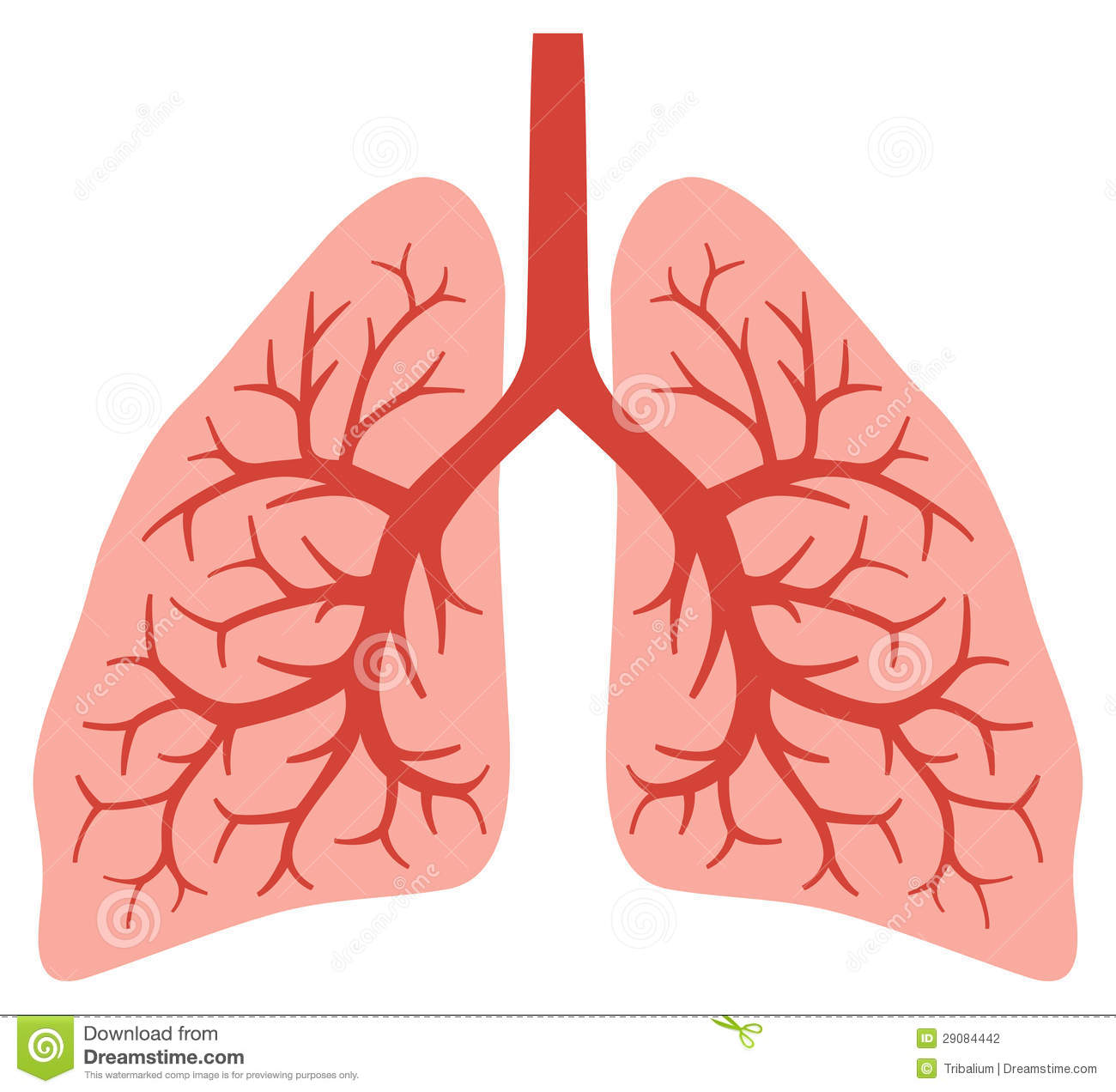 Animated Human Lungs