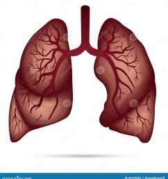 human lungs anatomy for asthma tuberculosis pneumonia lung ca tb pneumonia diagram [ 1325 x 1300 Pixel ]