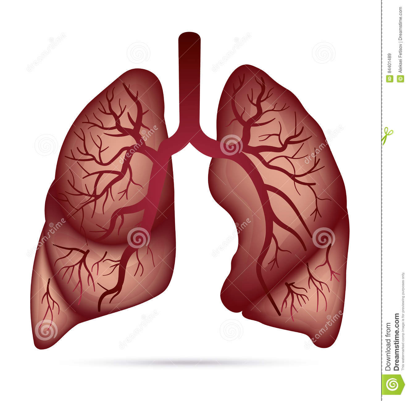 lung diagram drawing xfinity network tuberculosis in human lungs cartoon vector | cartoondealer.com #73719353