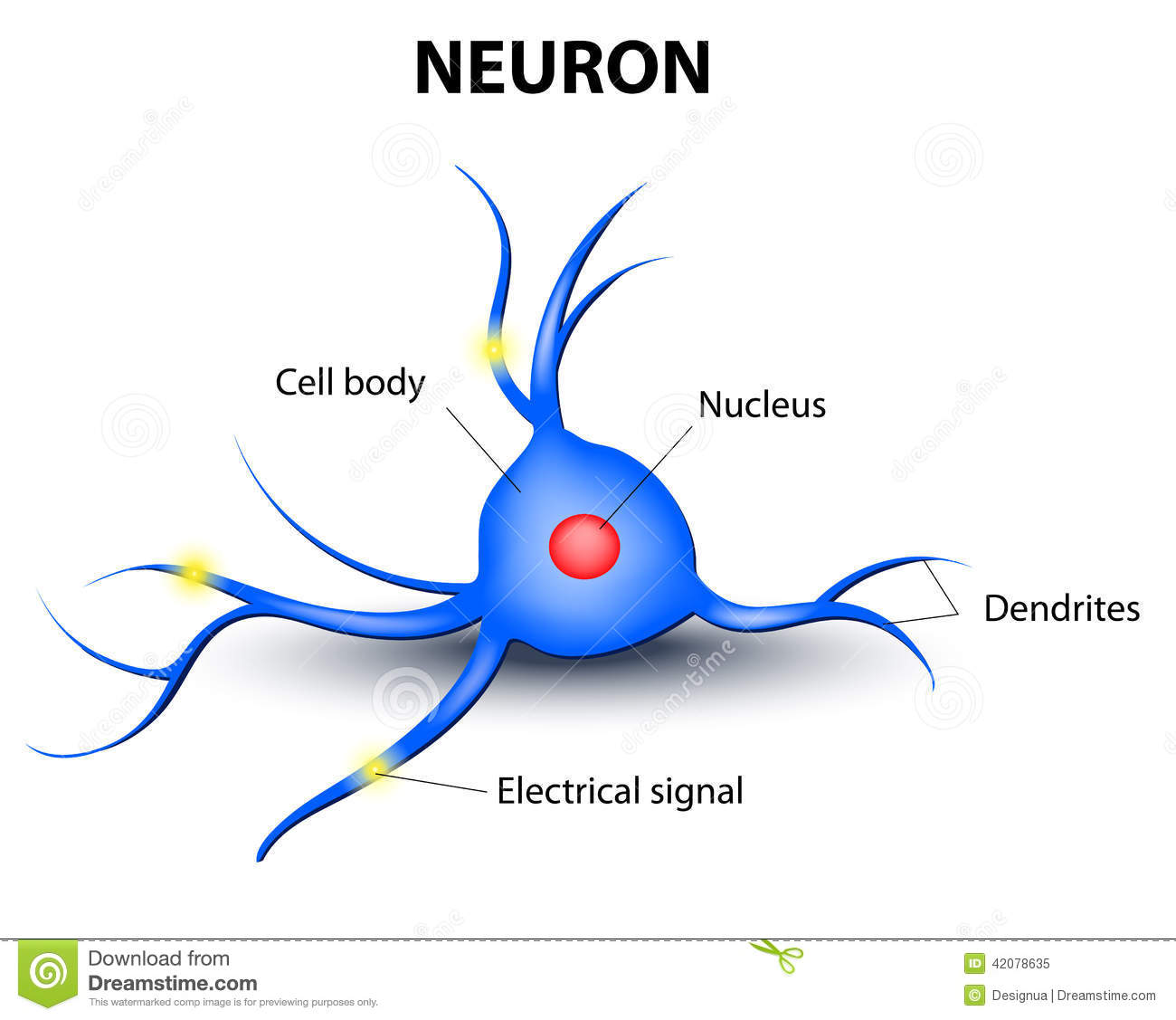 human brain cell diagram honda civic wiring stereo neuron on a white background stock vector image