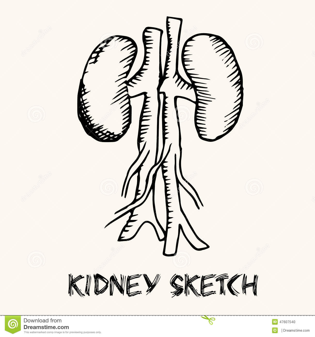 Human Organs In Sketches Style Set Vector Stock Vector