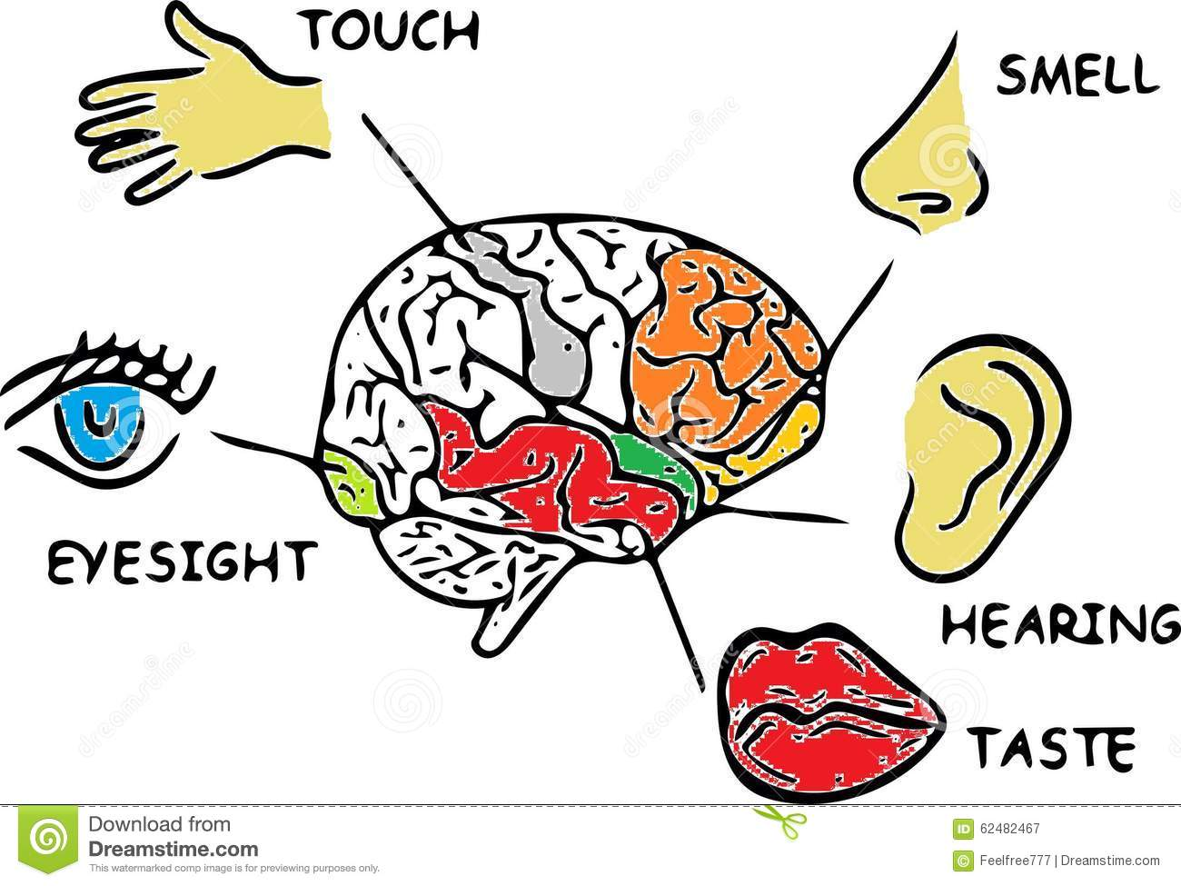 Human Senses Stock Illustration Illustration Of Your