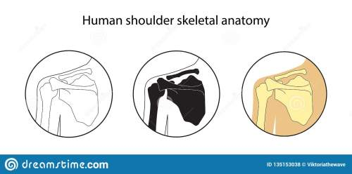 small resolution of human shoulder skeletal anatomy vector illustrations set educational anatomy materials medical center clinic institute rehabilitation diagnostic