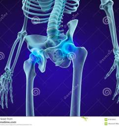 human skeleton pelvis and sacrum xray view medically accurate 3d illustration [ 1300 x 1067 Pixel ]
