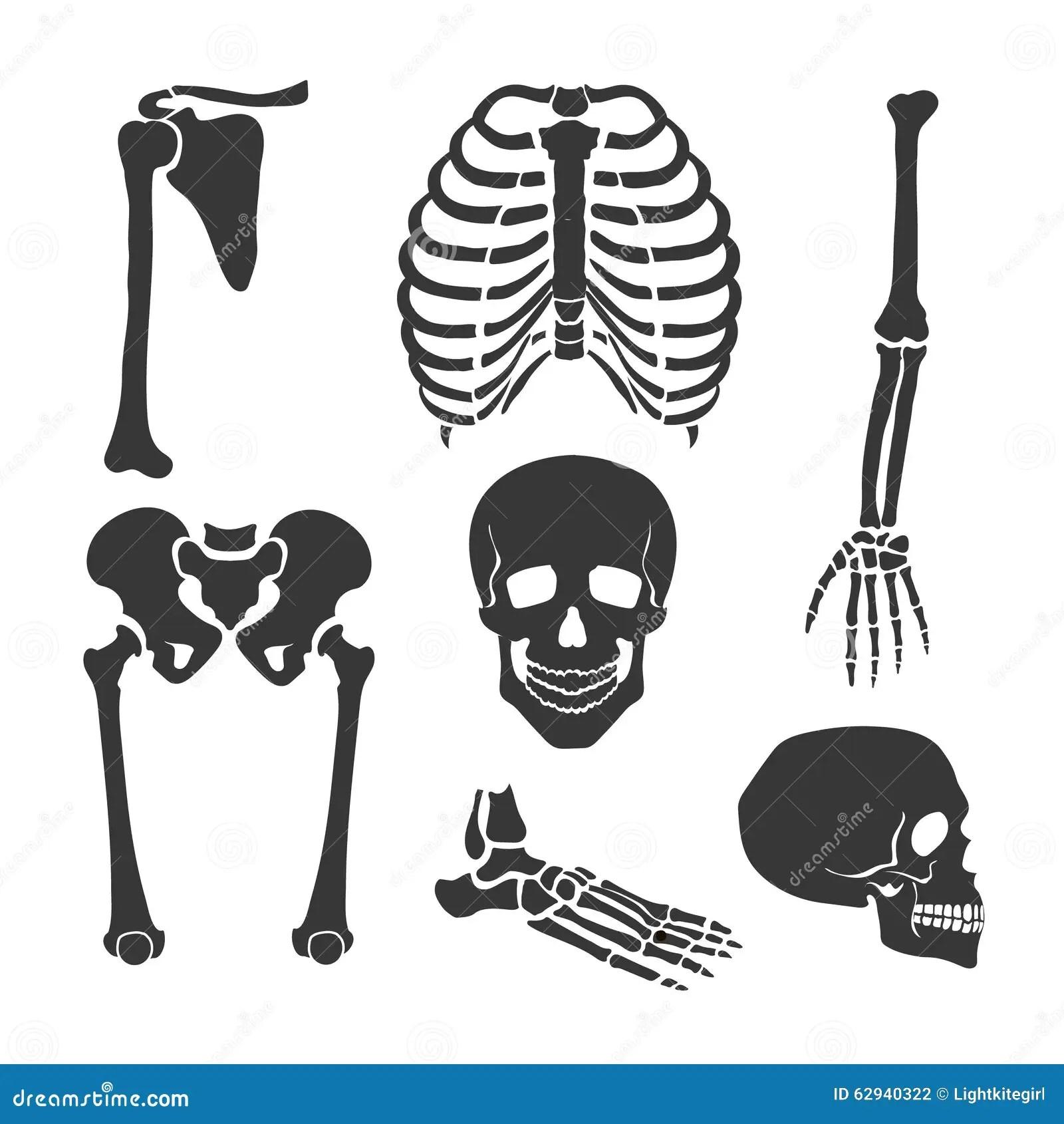 Human Skeleton Vector Black Illustration Set Stock Vector