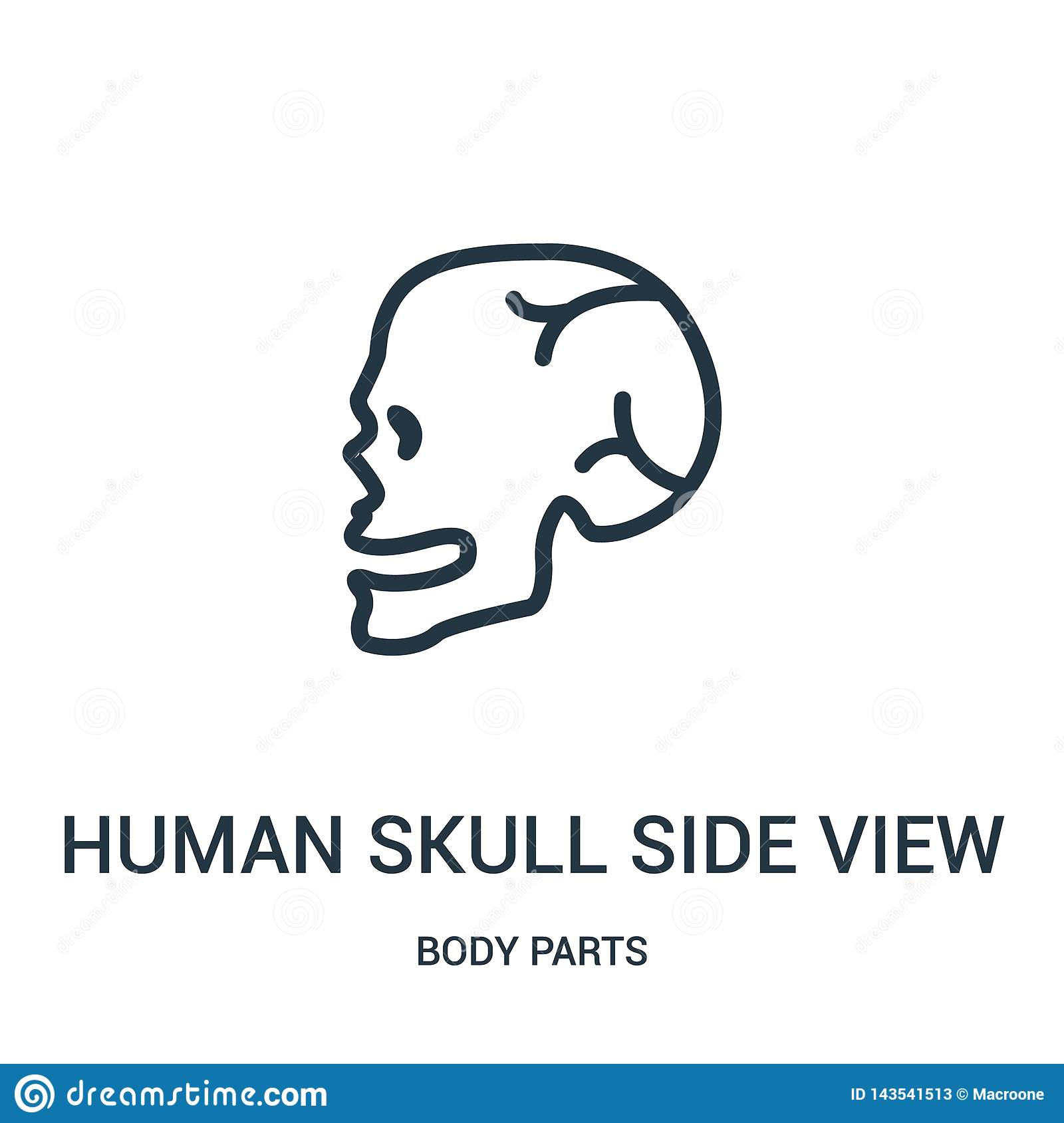 Human Skull Side View Icon Vector From Body Parts