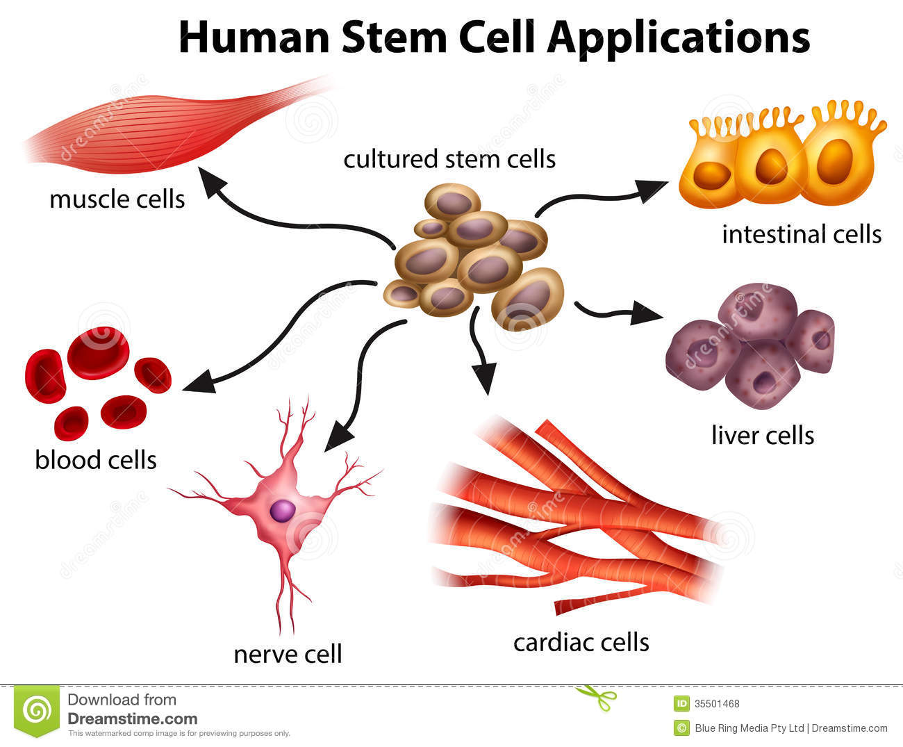 Human Stem Cell Applications Stock Vector