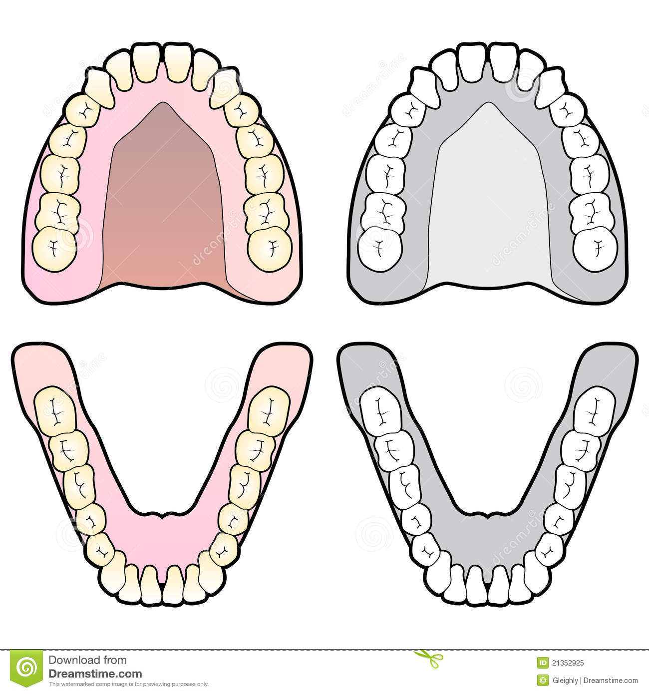 Printable Human Teeth Diagram