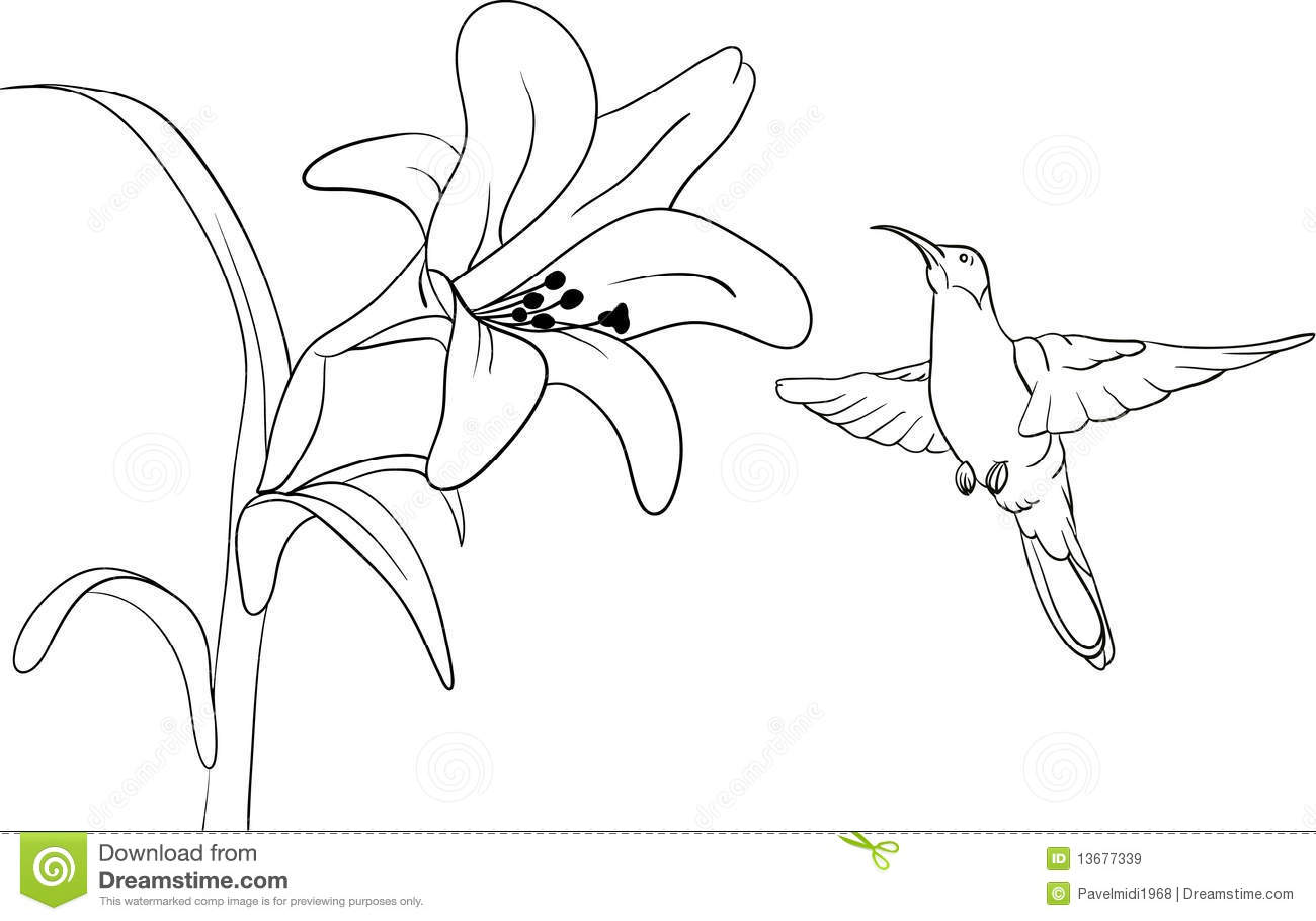 Hummingbird Stock Vector Illustration Of Wild Plant