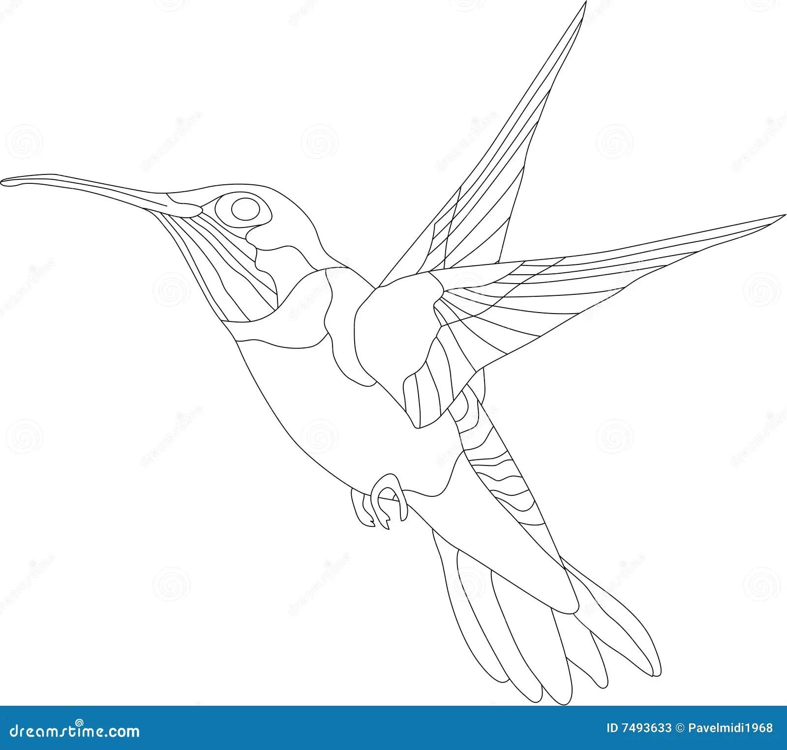 Hummingbird Stock Vector Illustration Of Wildlife Line