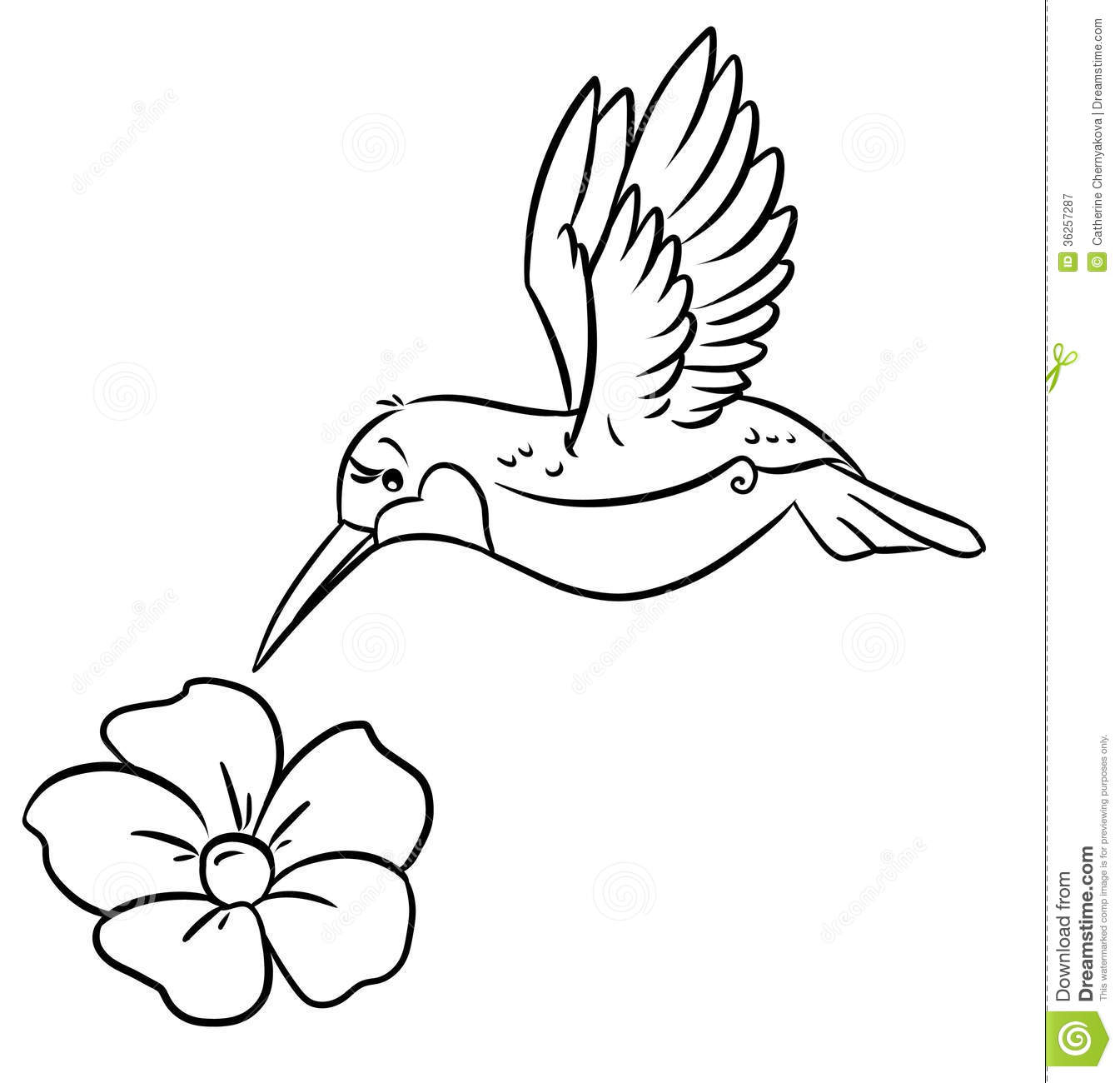 Hummingbird And Flower Coloring Page   Coloring Pages Of ...