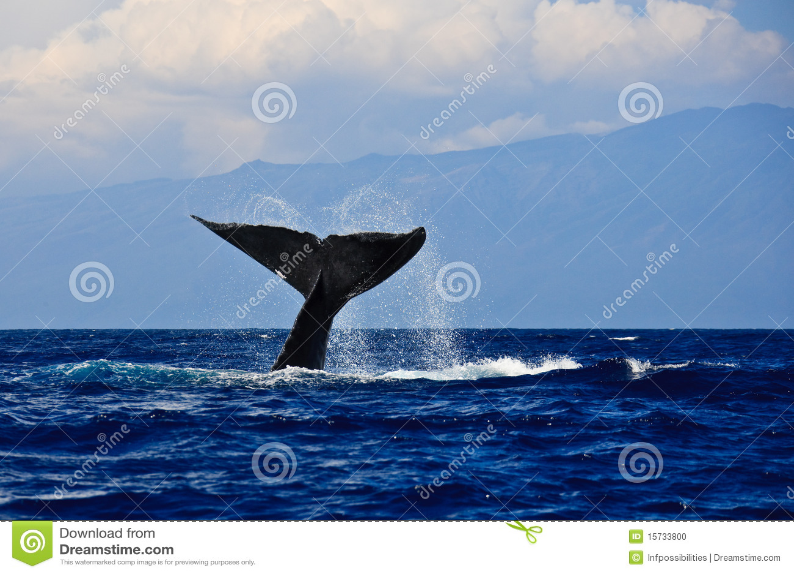 Akaka Falls Wallpaper Humpback Whale Tail Stock Photo Image 15733800