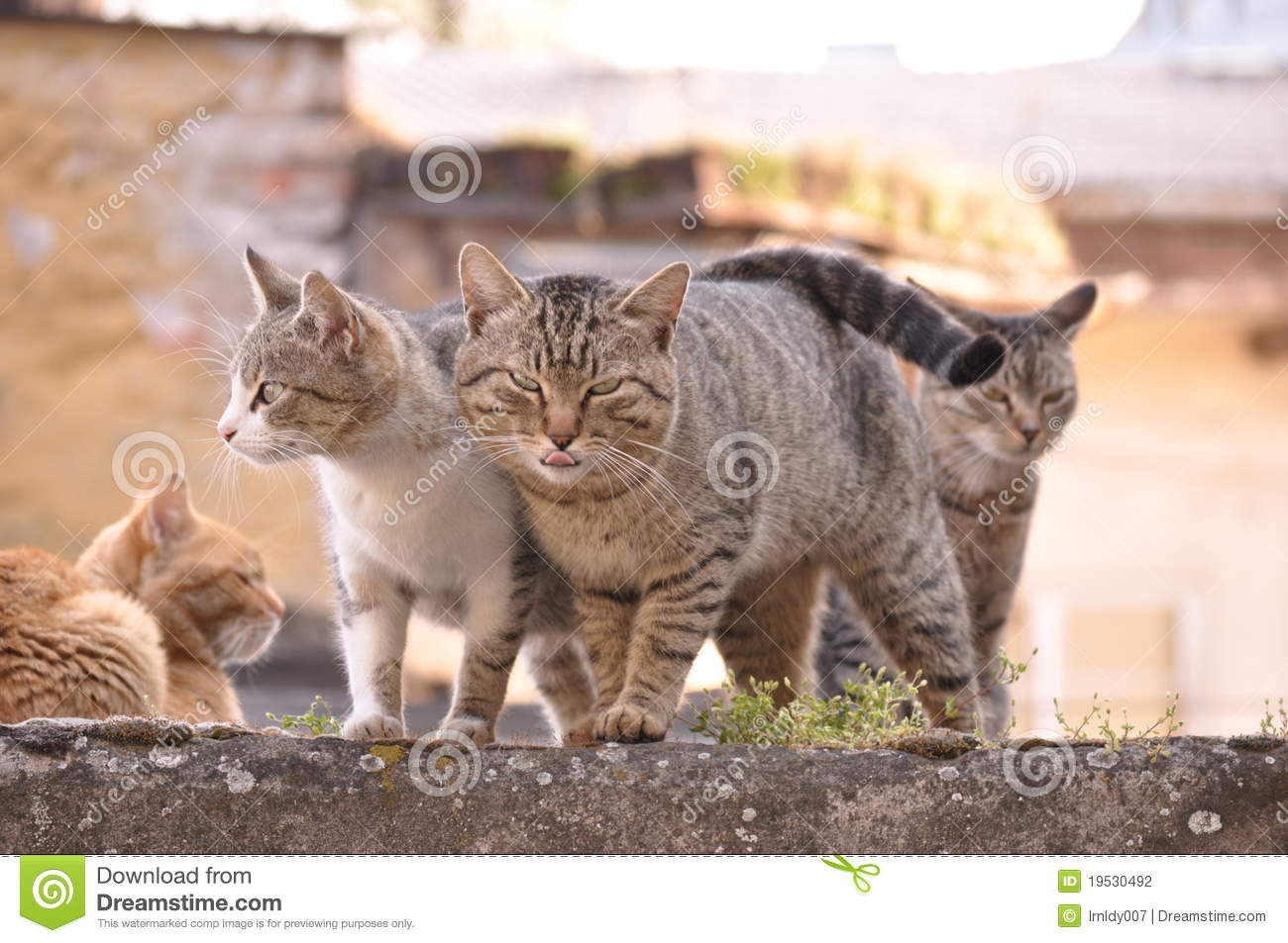 Hungry cats stock photo Image of green eyes strike  19530492