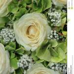 Hydrangea And Roses Bridal Bouquet Stock Photo Image Of Decoration Bouquet 107203012